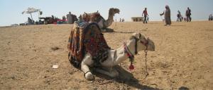 Essay egypt crisis